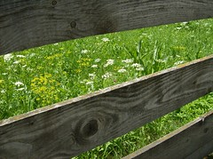 Prato in montagna (SissiPrincess) Tags: wood flowers italy grass europe natura erba fiori sole profumo sancandido thegalleryoffinephotography