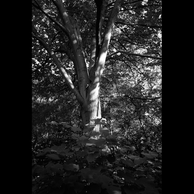 Árvore e Folhagem