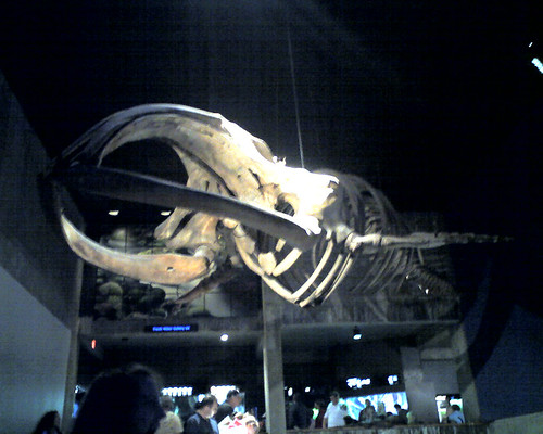 Whale skeleton - New England Aquarium, Boston, MA
