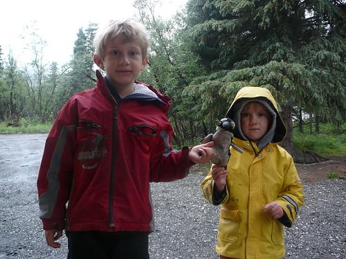 Pablito haciendo nuevos amigos Ethan y Elly bajo la lluvia en Denali Park