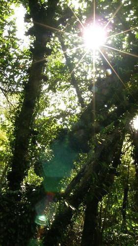 11.陽光從樹林上灑落