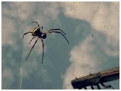 o doce veneno [...] (Matteus Oberst) Tags: spider veneno aranha teia