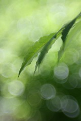 Enchanted Green (F l e u r) Tags: berlin green leave nature lensbaby germany evening bokeh bubbles tiergarten enchanted 365bokeh
