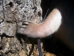 Anteater foot action