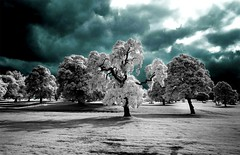 Infrared Trees. (coulombic) Tags: blue trees photoshop canon garden ir scotland infrared 5d canon5d canoneos digitalinfrared falsecolor glamis infraredfilter infraredcamera canoneos5d infraredphotography gabefarnsworth canonef1635mmf28l infraredtrees maxmaxcom infraredlight canoninfrared converteddigitalcamera infrareddigitalphotography coulombic infraredscotland ldpllc photocontesttnc09 canoneosinfared