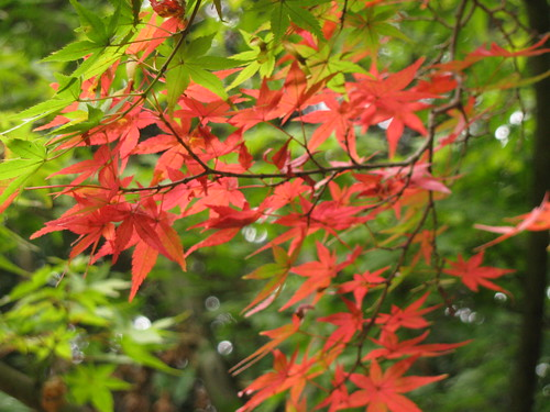 Autumnal signs (taken by Tania)