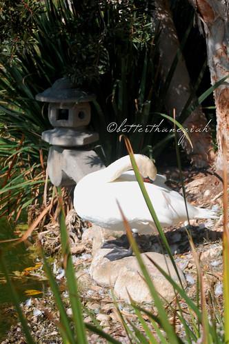 Lake Shrine 075
