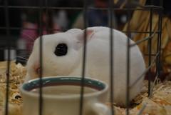 Bunny with guyliner