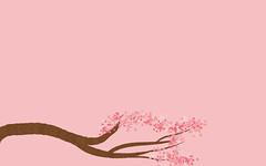 cherry-blossom-ws
