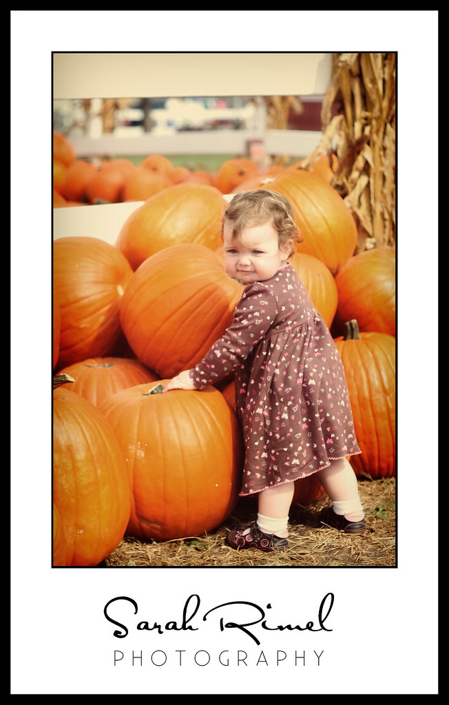 pumpkin patch 13