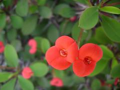 . (lacklady) Tags: flores flower flor jardin blacklady