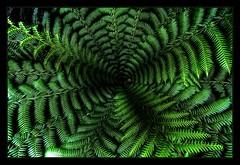 nature patterns (gari.baldi) Tags: vacation england abstract fern green texture nature canon 350d pattern gimp wideangle structure 2008 garibaldi hdr farn eyecatcher lightroom patern paperwall cornwal photomatix 1xp artbynature