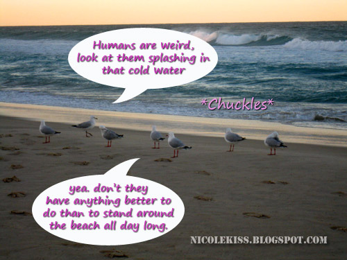 seagulls at the beach thinking