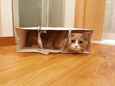 i love paper bags!!