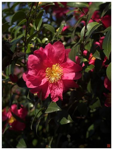 Flowers 081216 #03