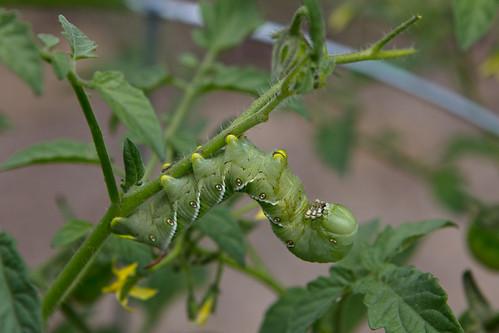 110623 Caterpillar