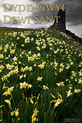 St. David's Day (Sean Bolton (no longer active)) Tags: swansea wales cymru daffodil stdavidsday abertawe seanbolton ffotocymrucouk