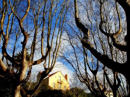 Winter trees - Árvores d'Inverno - 2