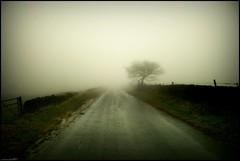 (andrewlee1967) Tags: road tree mist yorkshire canon400d andrewlee1967 uk aplusphoto roydmoor england andrewlee mywinners