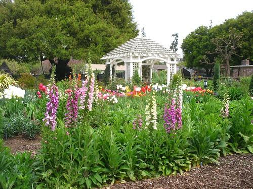 Digitalis (Gamble Garden; Palo Alto, CA)