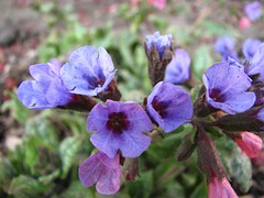 Wonderfully Violet (JL Outdoor Photography) Tags: flora springtime catchycolorsviolet springtimeflowers pinkbluespectrum
