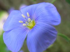 cool blue macro :)