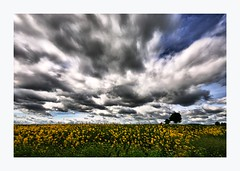 Moody Rural View ~ Tayside ~ Scotland (Magdalen Green Photography) Tags: trees nature clouds rural landscape scotland moody dundee scottish tayside rapeseed coolgreen coolnature moodyruralview~tayside~scotland