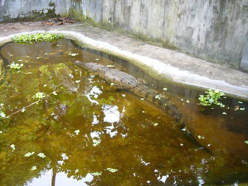 samui snake farm-サムイスネークファーム0018