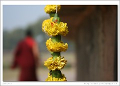 Buddhist (arturii!) Tags: voyage city trip travel viaje flowers winter red india men history primavera home monument beauty yellow wow person vacances photo spring amazing nice interesting ruins holidays tour dof view place action background buddhist awesome religion flor monk buddhism move route stunning varanasi vista viatge vermell tradition capture recent historia buda artur ganga gettyimages ganges pradesh ciutat sarnath benares uttar monjo budista hivern clavells impresive lloc mywinners canoneos400d vacacioens arturii paterwa vtivestupas gunjap