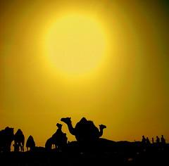 Develer ve nsanlar (nur-u ay) Tags: people camel deve insan gne l  arabistan suudarabia