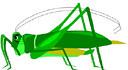 grasshopper (3doel82) Tags: fish bird animals insect gambar koleksi ikan belajar burung binatang carnivora serangga mamalia amphibi