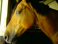 DSC00177 (jacaranda4) Tags: cheval mare du pont dor concours stallion foal cso poulain dressage jument coty radon complet elevage