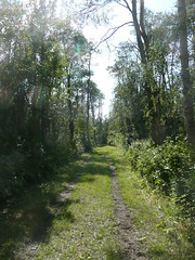 Blackfoot - Wapiti Trail (Lindbrook, Alberta, Canada) Photo