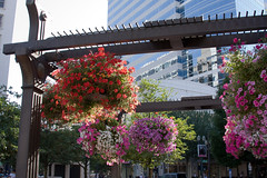 pdx | downtown (ja | castillo) Tags: oregon canon portland landscape downtown raw flowering pdx urbanism pioneersquare inbloom hangingbaskets pedestrianfriendly ef28135f3556isusm itsinthedetails 40d canoneos40d