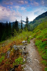 Late Afternoon on the Trail (Nick Carver Photography) Tags: trees sunset plants usa cloud tree green nature rock vertical pine clouds forest landscape outdoors landscapes washington spring rocks hiking trails hike trail serenity pacificnorthwest serene lush desolate westcoast snoqualmie damp hikes clearingstorm dennycreektrail mtbakersnoqualmienationalforest ncpfineartprint