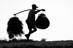 the harvest (Farl) Tags: travel sunset bw bali seaweed silhouette backlight work indonesia basket farm labor harvest balance highkey farmer nusadua cottonii guso kappaphycusalvarezii sawangan rumputlaut
