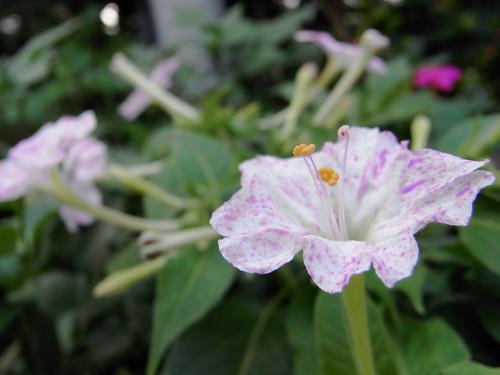 RICOH R10 macro flower