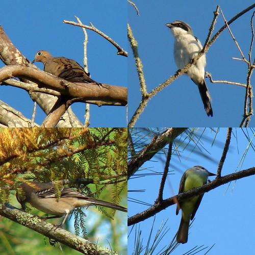 Wild Birds Collage