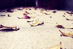 equilibrio <molto> precario (bryenh) Tags: autumn rome roma leaves foglie nikon poesia autunno d40 ungaretti nikond40