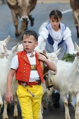 Immer vorne Weg (Arpad Anderegg) Tags: boys animal schweiz switzerland nikon child sale kind tradition markt 2008 d3 junge appenzell childern viehmarkt tra