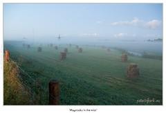 Haystacks in the Mist... (Peterbijkerk.eu Photography) Tags: orange sunrise geotagged nikon nederland nh oranje d300 zonsopkomst peterbijkerk wwwcompumesseu wwwpeterbijkerkeu compumessinc nikond300 geo:lat=52618318 geo:lon=4885644 sunrelatedpictures