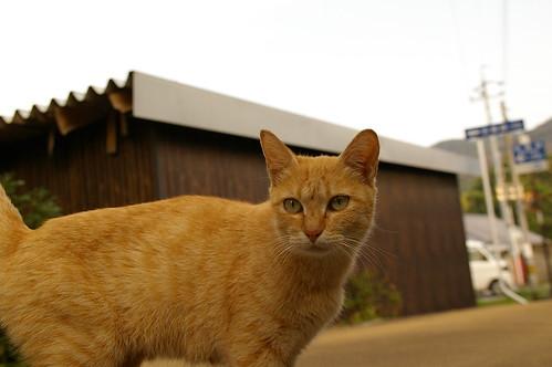 Stray Cat #2