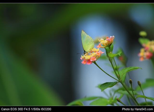蝴蝶_Butterfly_20