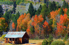 autumn colors and sierra cabin (Marc Crumpler (Ilikethenight)) Tags: california autumn trees usa mountains canon landscape fallcolor sierras hopevalley naturesfinest supershot tamron1750 40d abigfave anawesomeshot aplusphoto canon40d goldstaraward