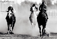 Conflict To Win ... (FaisaL HamadaH) Tags: horse sport work canon is center kuwait usm  2008 fa faisal voluntary 400mm f28l canoneos1dmarkiii  faisalhamadah canoneosmarkiii   canonmarklll conflicttowin