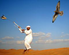 ,   (Abdullateef Al Marzouqi) Tags: blue white yellow desert uae hunting abudhabi falcon falconry kandoora laati desertlifestyle demureba3adp telwah