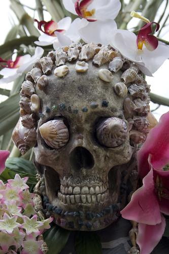 Palawan inspired skull