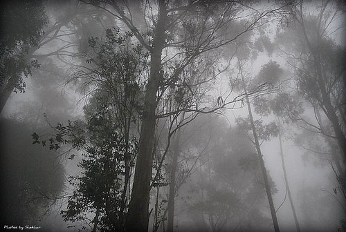Foggy morning in the woods of Kodai