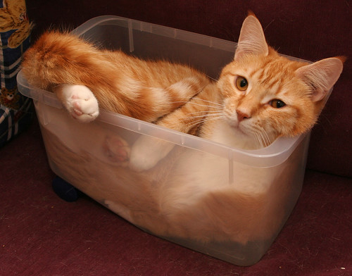Charley in tub