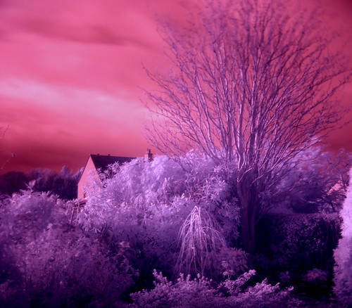 Front garden infra red 20Nov08